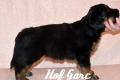 Hof Garc Frey Owner: Elena Orlova