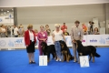 WDS-2016-наши-собаки-Чемпионы-Мира