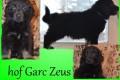 Hof Garc Zeus