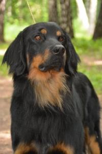 спинка носа нижняя челюсть черные но при этом подпал очерчен четко яркий. собаке на фото 2-года